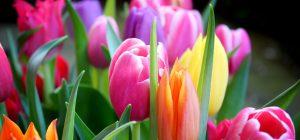 Vielfalt als Tulpenstrauß